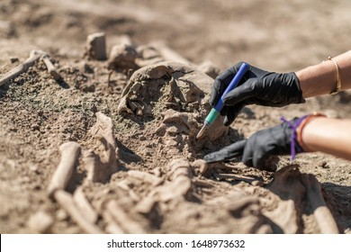 Archaeology - excavating ancient human remains with digging tool kit set at archaeological site.  - Shutterstock ID 1648973632