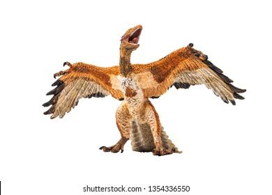 Archaeopteryx  , Dinosaur on white background .