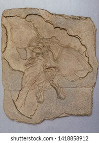 Archaeopteryx (Fossil Bird) lithographica from  Jurassic Lithographic deposit of Bavaria, Germany