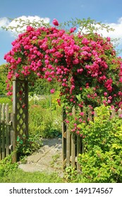 arched entrance with rambler rose, full bloom