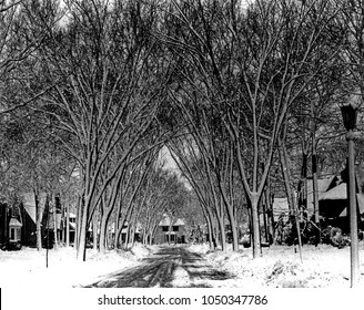 Arched trees over Winter street scene. Snow covers the trees, branches and sided. Scenic old elms cathedral arched over the roadway. From black and white film print.