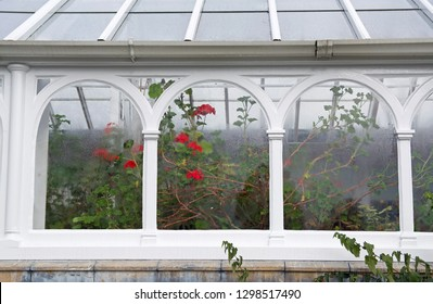 Arched windows of a conservatory with geraniums seen through the condensed glass
