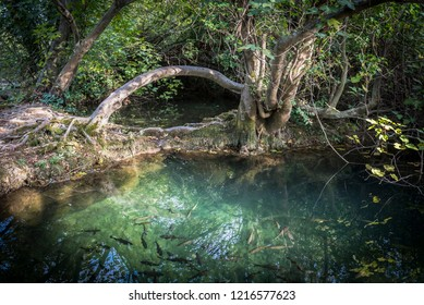 Arched wood and shady backwater with fish in the national park near Skradin, Croatia
