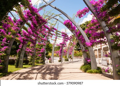 Arches covered with pink bougainvillea flowers. Southbank, Brisbane