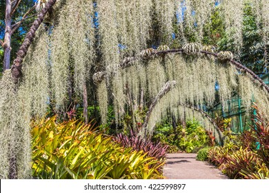 arches with lichen in the Botanic Garden of Singapore
