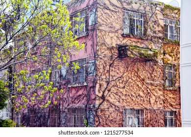 Architecture buildings with plants Ficus pumila climbing in the old building, closeup with tree around bilding, old European architecture style concept
