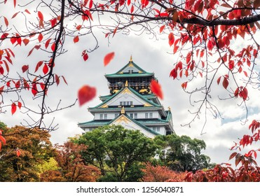 Architecture Osaka castle with red leaves falling in autumn park at Kyoto, Japan