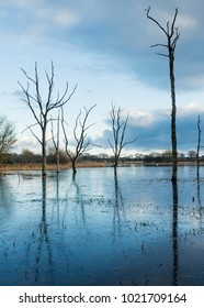 Arcot Pond, Northumberland. Winter Landscape of icy pond with dead trees standing surrounded by water.