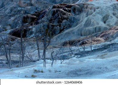 Arctic freeze at Pulpit Terrace of Mammoth Hot Springs in Yellowstone National Park with dead pine fir trees with blue purple ice snow clear sky winter time in Montana and Wyoming.