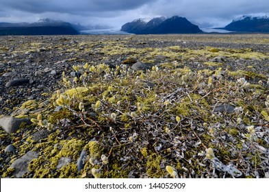 Arctic landscape near Skaftafell national park, Iceland