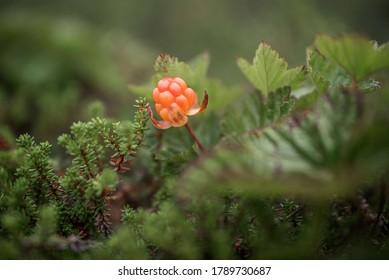 Arctic raspberries. An amber cloudberry bead.