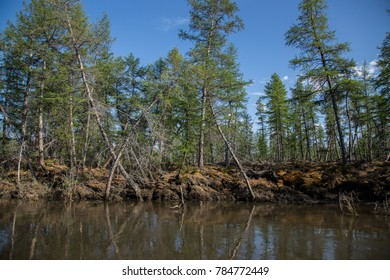 Arctic taiga and permafrost
