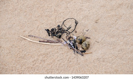 Arctic tern nest on a beach with two eggs