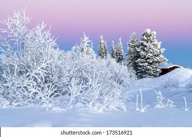 Arctic Winter Wonderland: Sunset  Christmas / Winter / Holiday / Scandinavia / Sweden / Finland / Norway / Alaska / Canada Background - Winter Wonderland