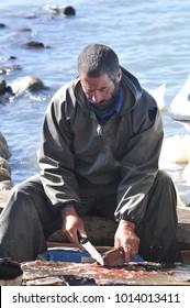 Ardahan, Turkey - October 16, 2009: Fishermen cleaning carp fish on Cildir lake in Ardahan city of Turkey