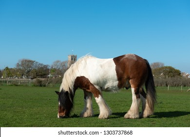 Ardennes horse on grass meadow
