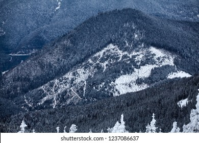 Area of illegal deforestation area in Carpathian Mountains in Romania