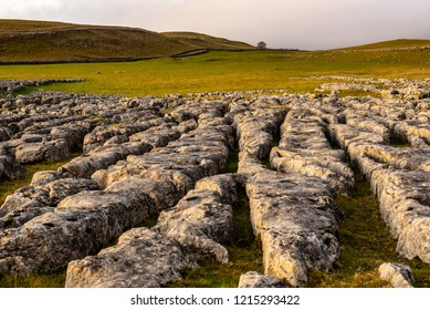 Area of Limestone pavement, Yorkshire Dales National Park