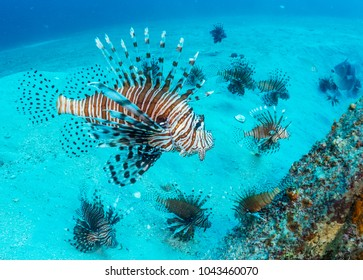 An area with many invasive lionfish - Destin, Florida