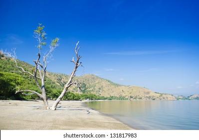 areia branca beach view near dili east timor