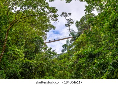 Arenal Hanging Bridges, hiking in green tropical jungle, Costa Rica, Central America.