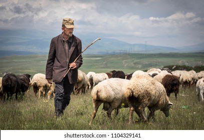 Areni, Armenia, 2nd June, 2018: armenian man herding his sheep in a countryside