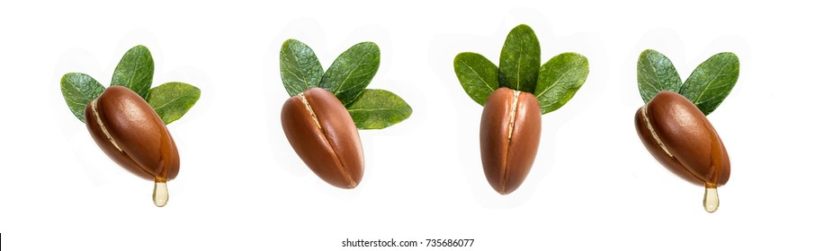 Argan nuts isolated for use in designs