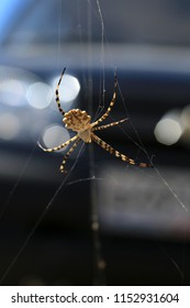 Argiope Spider (woman), photo close up, when I traveled across the steppe in the Crimea