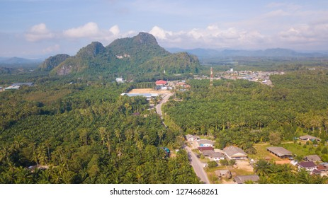 Arial view of oil palm plantation in Chumphon province, Thailand. Aerial landscape of oil palm tree in Chumphon. Select focus.