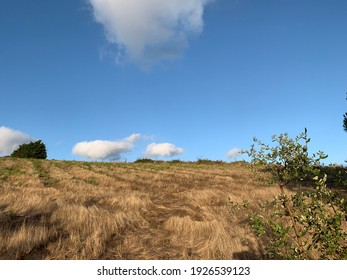 Arid hill with small bushes and blue sky