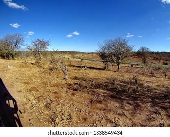 Arid landscape in Chobe National Park, Botswana