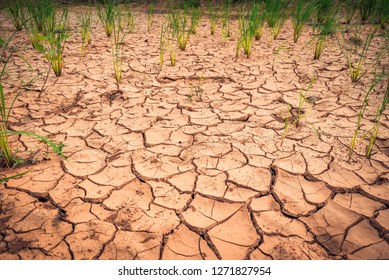 Arid landscape / Cracked ground dry land during the dry season in rice field agriculture area natural disaster damaged agriculture - broke soil texture and dry mud arid