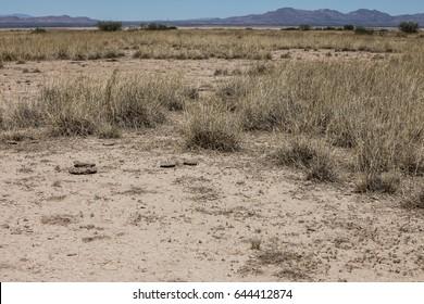 Arid pasture landscape with dry grasses in alkaline soil/Desert Alkaline Grassland in Rainless Weather/Poor quality desert grassy ranch land