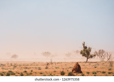 Arid plain with stunted trees and anthill in duststorm