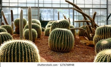 the arid plants area