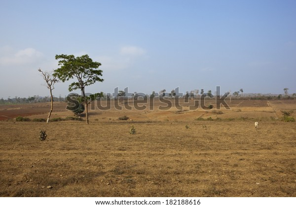 arid south indian landscape with agricultural fields of karnataka state