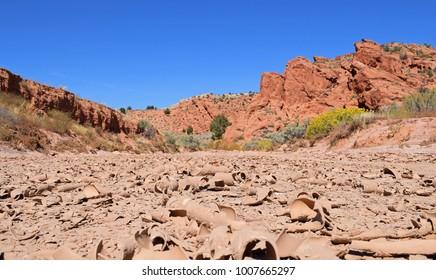 Arid Utah desert dry and cracked