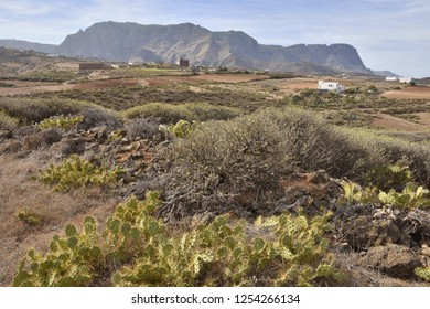 Arid volcanic landscape with succulent plants, near town of Agaete north-west of Gran Canaria Canary Islands Spain.
