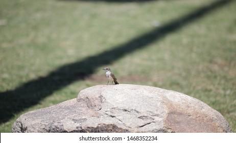Arizona Birds in a Desert Park