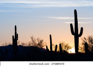 Arizona desert landscape at sunset with saguaro cactus silhouetted