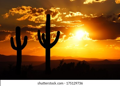 Arizona desert sunset with giant saguaro silhouette