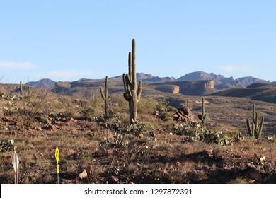 Arizona National Forest (Tonto)