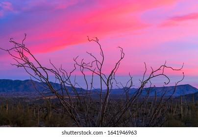 Arizona Sunrise With Ocotillo Cactus & Vibrant Sky