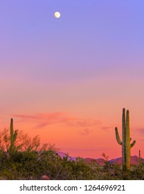 Arizona sunset with saguaro cacti and moon