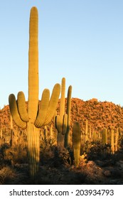 Arizona's Saguaro National Park West