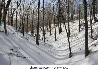 Arkansas Woods after a Light Dusting of Snow