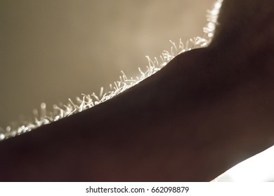 Arm hair of human beings. It reflects the light and shadow.