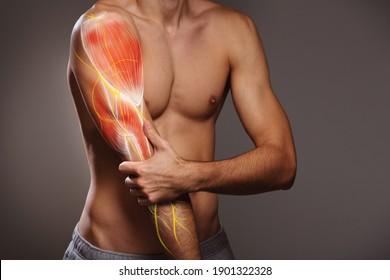 Arm nerve pain, man holding painful zone injured point, human body anatomy