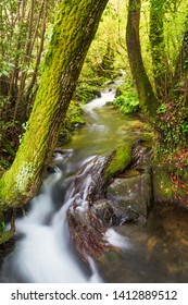 Armenteira river flowing between the forest on the stone and water route in Meis town, Galicia, Spain