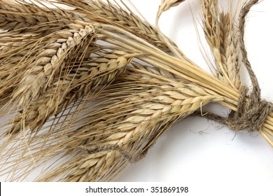 Armful of dried ears of rye tied with rope